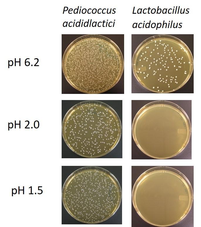 petri-dish-ph-levels